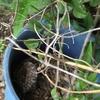 磐田市でお庭で大量発生した蜂の巣を駆除!