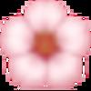 滝桜の思い出  白い花