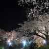 JR御殿場線 山北駅の桜が見頃です