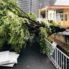 【防災の日】大きな地震や台風を経験して感じた、災害の備えに大事な物や事。
