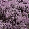 天気が悪い日の桜撮影とコツと設定(一眼レフ初心者用)