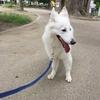 マギーちゃんは公園散歩