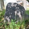 万葉歌碑を訪ねて(その1012)―春日井市東野町 万葉の小道(9)―万葉集 巻二 二三一