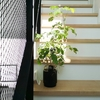観葉植物は室内でどこに置く?我が家は階段で決まり!