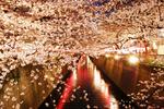東京都内の桜は夜もおすすめ。ライトアップ・夜桜が楽しめるお花見の名所ベスト7