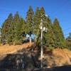 12月6日(防風樹伐採Ⅱ)