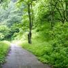 雨の森と渓流