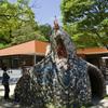 オスだけがカブトムシじゃない『赤塚山公園』