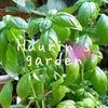 『バジル』を挿し芽&水揚げで増やすのがもの凄く簡単でビックリ!葉を食べる虫には注意。