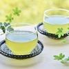 立花真由美×株式会社エナジー×日本茶