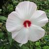 まだまだ元気な夏の花(2)
