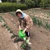砂時計と蒸し野菜
