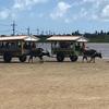 【ひとり旅】西表島から由布島へ。水牛に乗って行く浅瀬の島。