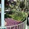 赤紫の絨毯