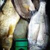 カツマグおすすめする白身魚!