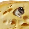 《 実践問題7》チーズが消えた理由を考えよう!
