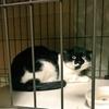猫猫強化週間~野良猫バットニャンと実家猫~