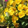 4月のジューンベリーと庭の様子