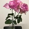 これで花も長持ち!切り花用の延命剤の効果と、お勧め。