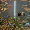 石巻貝お迎え18ヶ月目