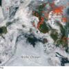 北極圏で前代未聞の大規模「山火事」発生:「白熊」のっそり!  (BBC-News, August 2, 2019)