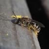花粉おとし