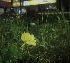 ★黄色い花
