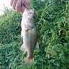 バスフィッシング(13)&川釣りに行こう!