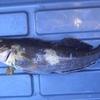 本日の釣行パート1 釣行ナンバー16