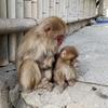 波勝崎で猿を見て人間の愚かさを嘆く:前篇