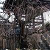 サクランピック・エキシビションマッチ サクラ以外の春の花と電車達