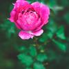 花を撮るコツ