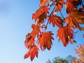 秋の藻岩山_2013年10月19日