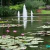 睡蓮の池 ― フラリエ#2 ―