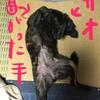 黒いもの〜甲斐犬サンはどこへ⁇( ´∀`)分カルカナァ?