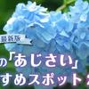 【2021年最新版】京都の「あじさい」が美しいおすすめスポット25選
