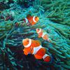 【海水魚飼育を決断】ささやかな夢であったアクアリウムへ!!