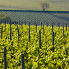 フランスのブドウ畑、世界遺産に登録決定
