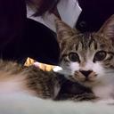 猫は君を永遠に愛します