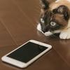 日本で絶大な人気を誇る「ネコ系アプリ」のオススメ