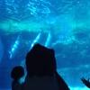 英会話ロボット★チャーピーのひと言英会話「あなたが邪魔で見えません」を英語で言うと?@名古屋港水族館