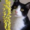 金色の花房が咲くまで