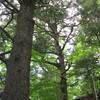 三峯神社から奥の院を経て大陽寺