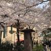 桜満開の花のみち