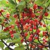 庭の果実2