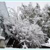 梅と雪と瑠璃光寺