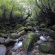 「もののけ姫」モデルとなった屋久島の白谷雲水峡「苔むす森」、幽玄な苔と巨木の世界