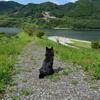 いざ県北へドライブ。奥津湖&県立森林公園の巻。