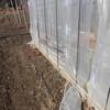 ビニール温室の南側面の修理