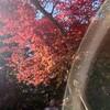 愛媛県松山市にある星の丘温泉で正月は朝風呂!母の変な風習?